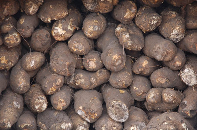 Yam - Grow Crops Online